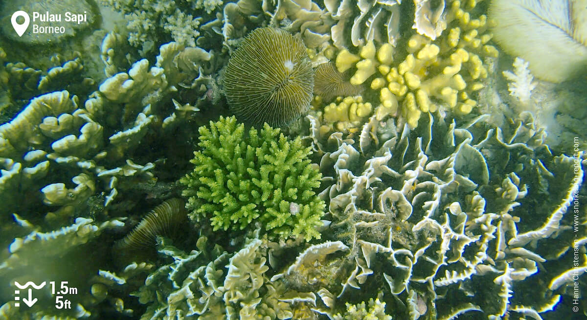 Coral reef in Pulau Sapi