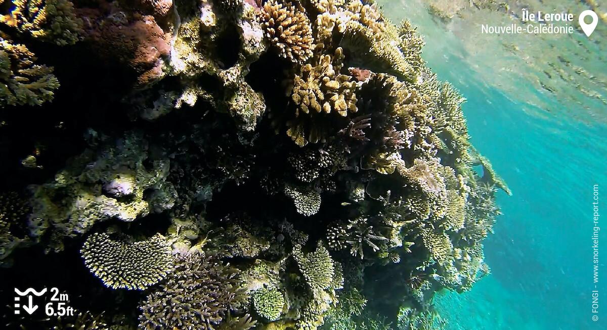 Récif corallien à l'île Leroue