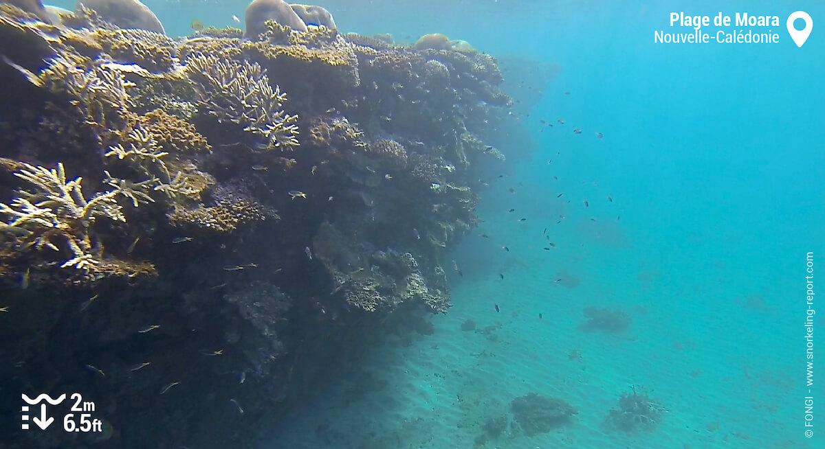 Récif corallien à la plage de Moara