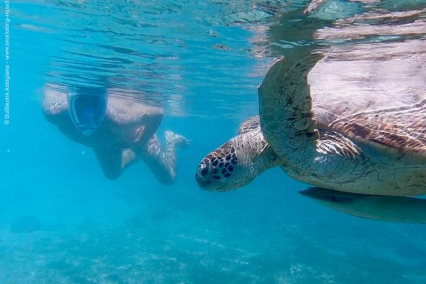 Plus meilleurs hôtels pour le snorkeling