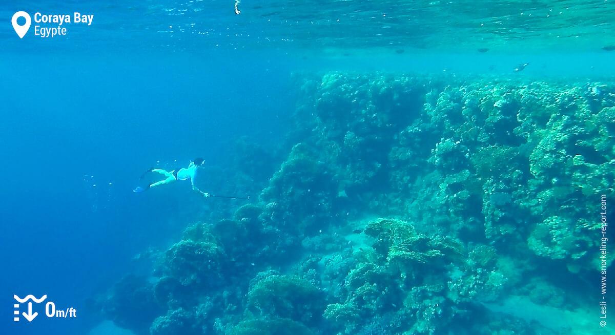 Snorkeling sur le tombant récifal de Coraya Bay