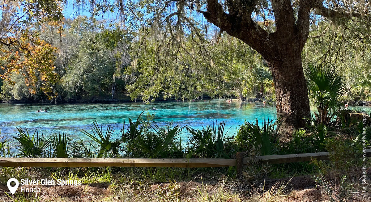 Silver Glen Springs, Florida