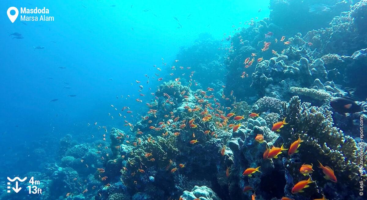 Masdoda coral reef