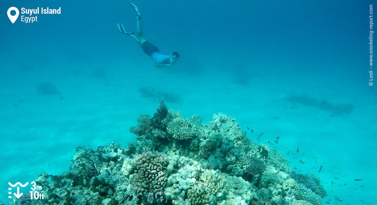 Snorkeler over Suyul Island's coral reef