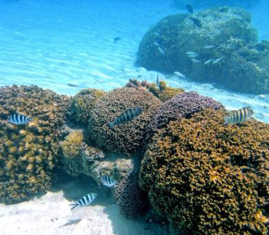 InterContinental Bora Bora Thalasso Spa
