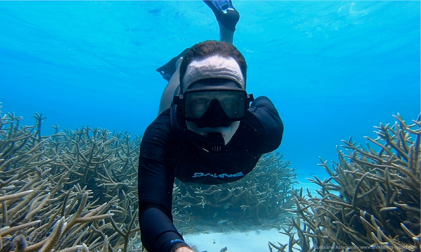A snorkeler swims above staghorn coral in Bonaire