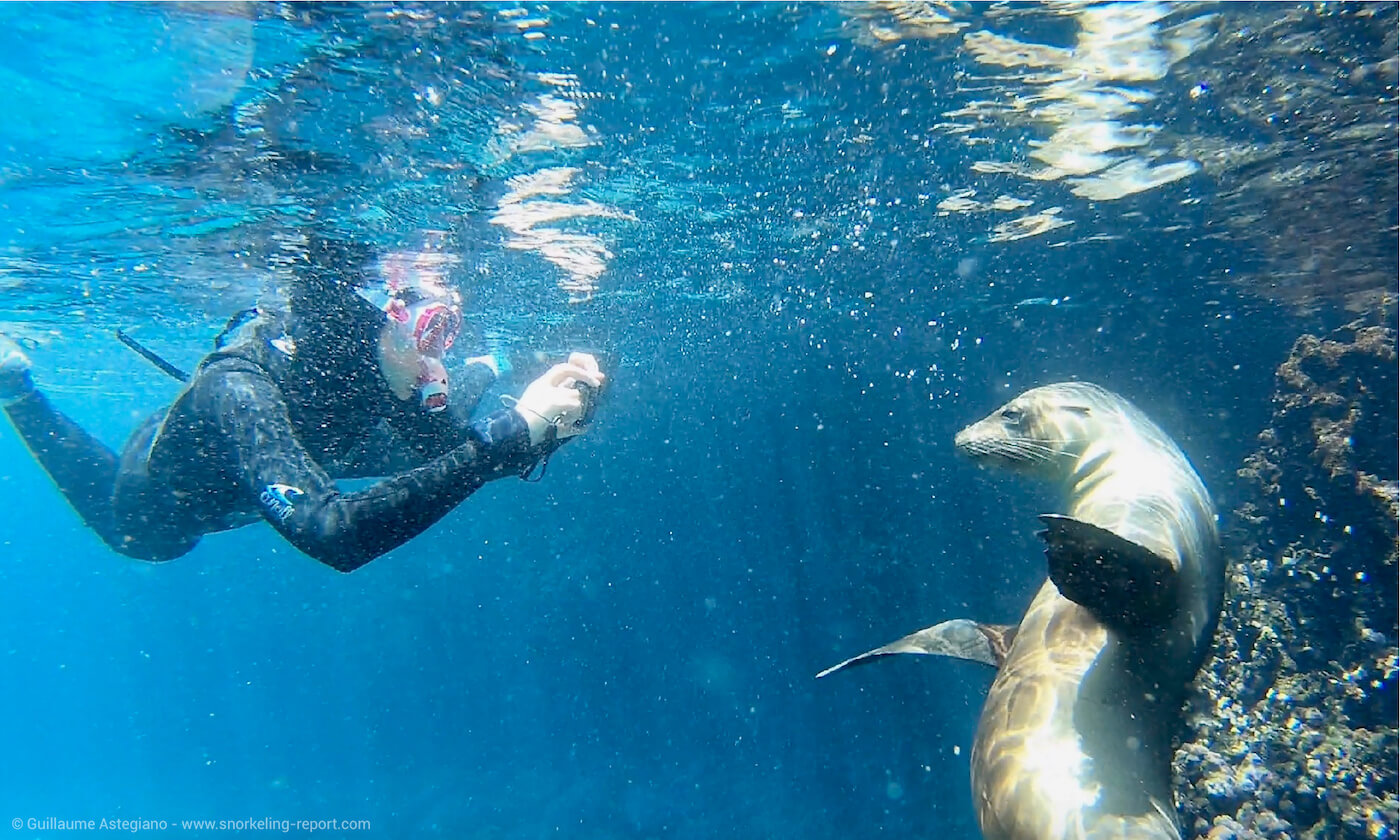 A women is taking a picture of a sea lion in the Galapagos Islands