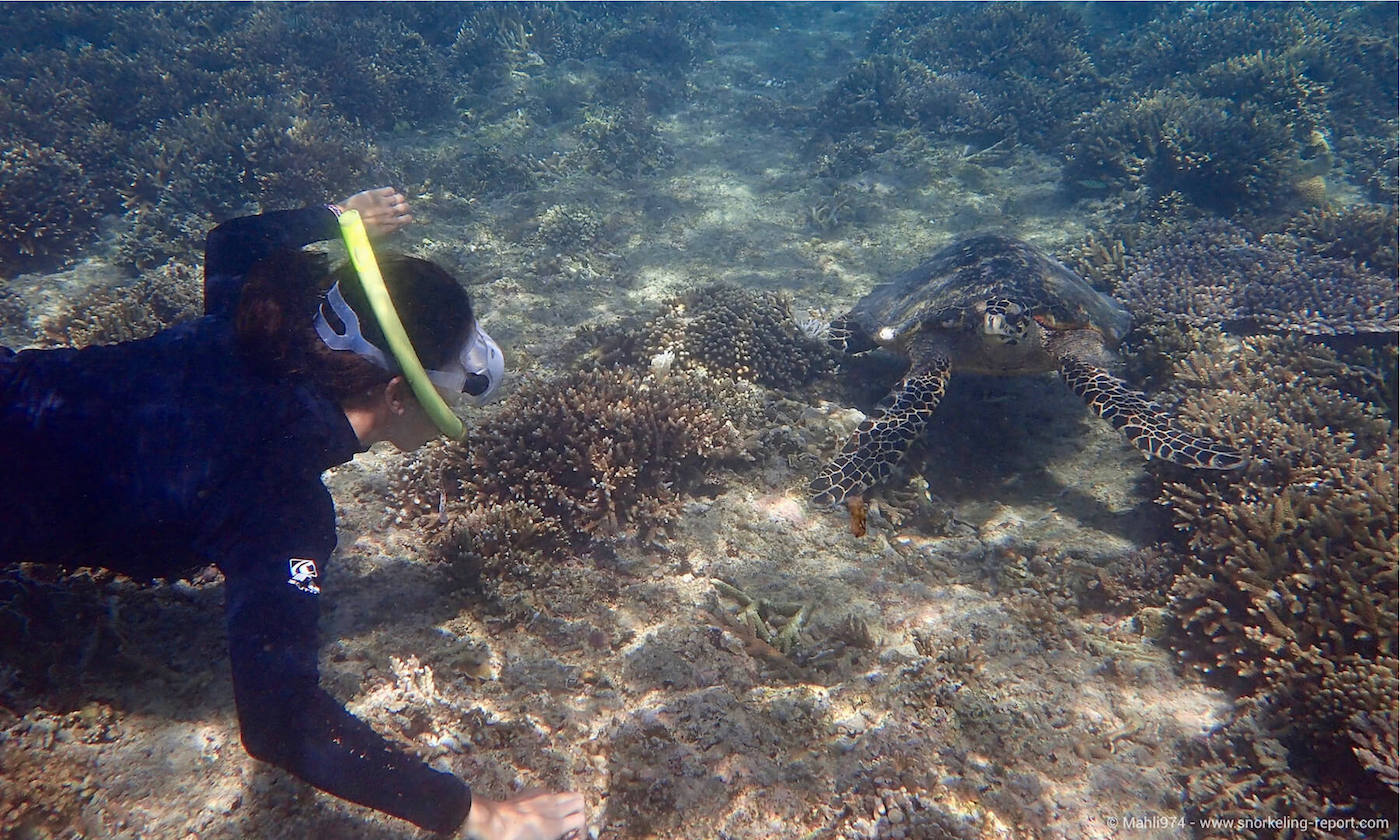 A snorkeler observes a sea turtle in Indonesia