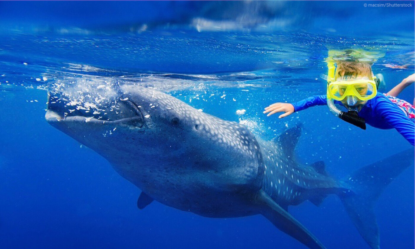 Whale shark encounter in Mexico