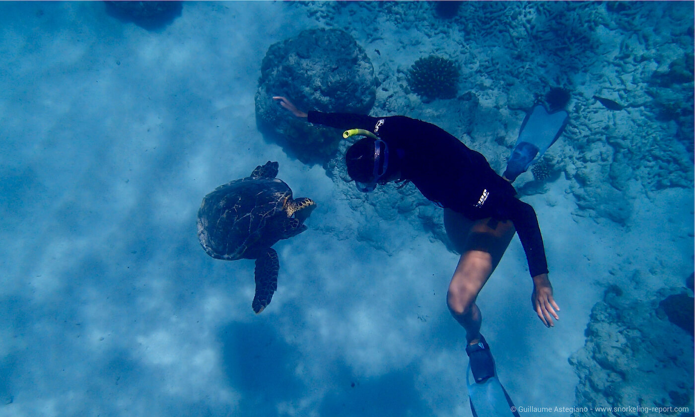 Encounter with an hawksbill sea turtle in Seychelles