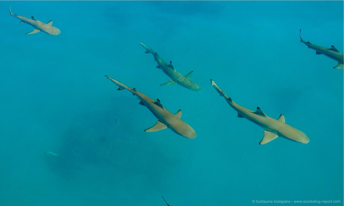 Sharks at the Blue Lagoon, Rangiroa