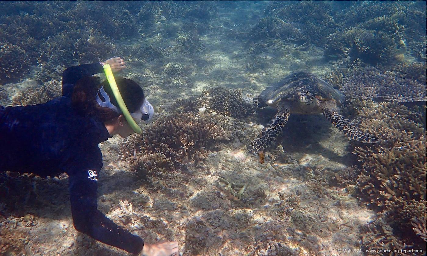 A snorkeler sights a sea turtle in Gili Islands