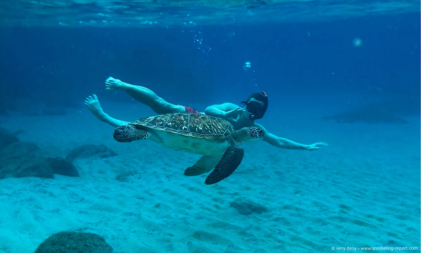 Snorkeler with a green sea turtle in Anse Dufour, Martinique