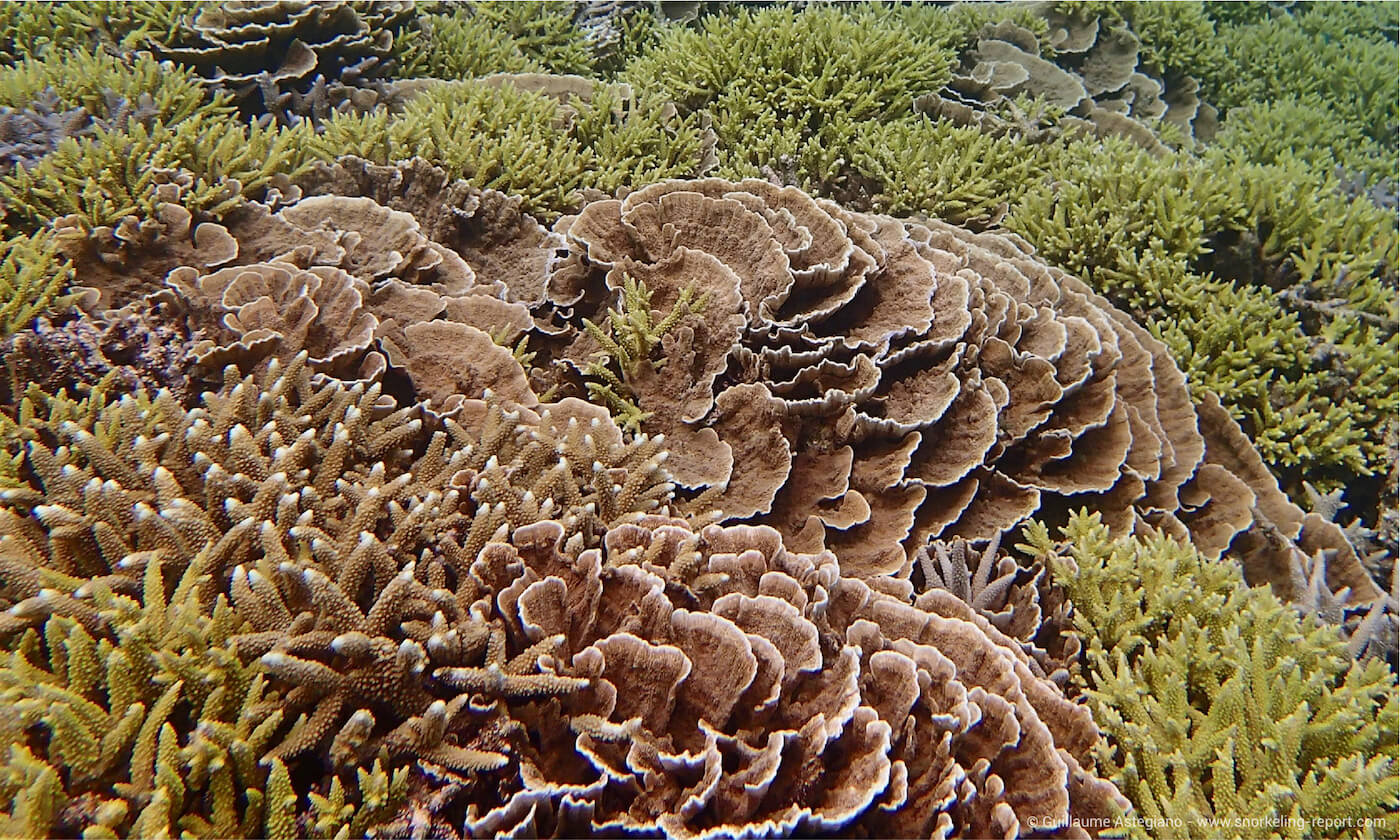 Coral reef at Aharen Beach, Okinawa
