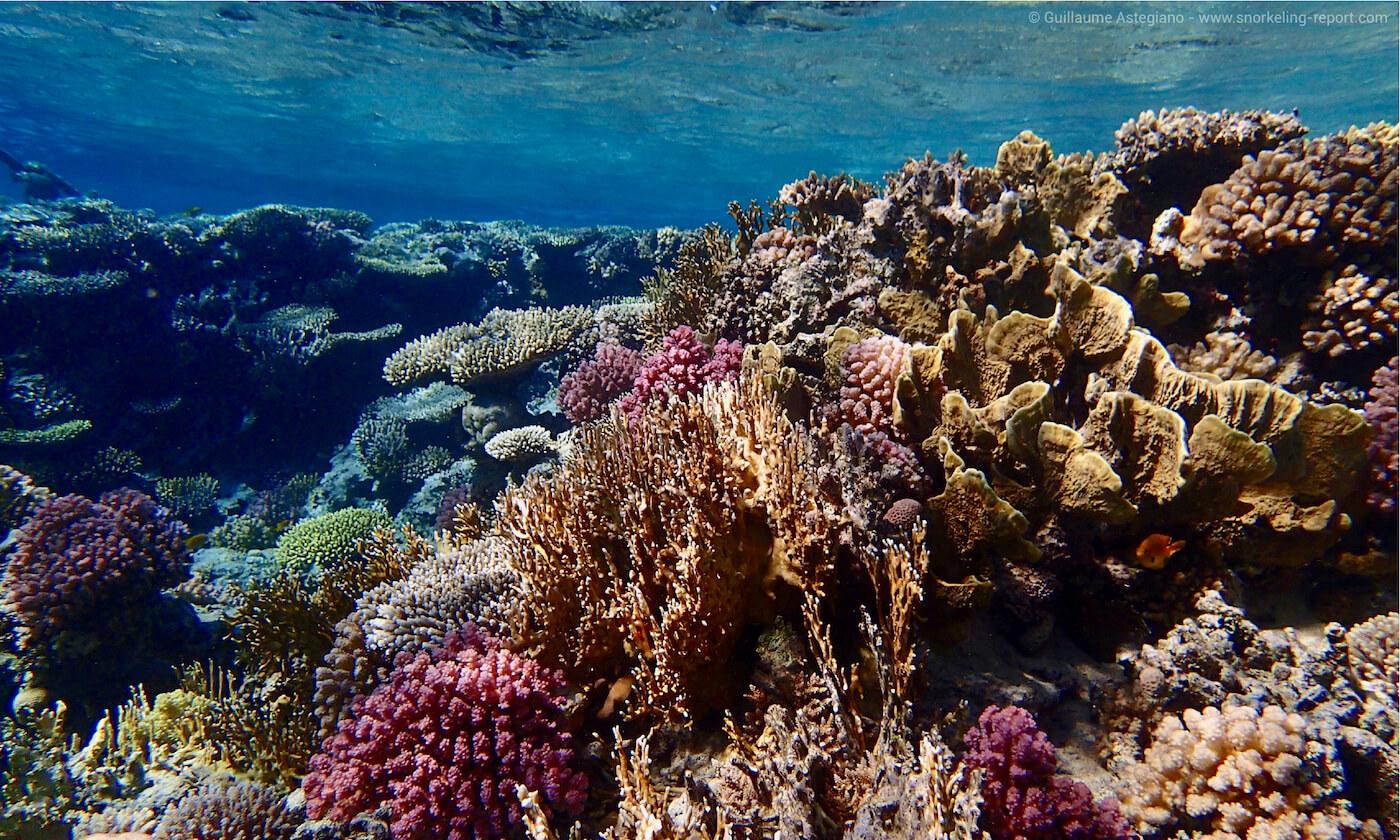 Gordon reef, Egypt