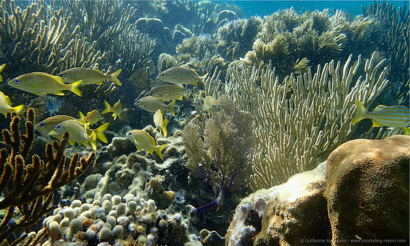 Coral reef at Puerto Morelos