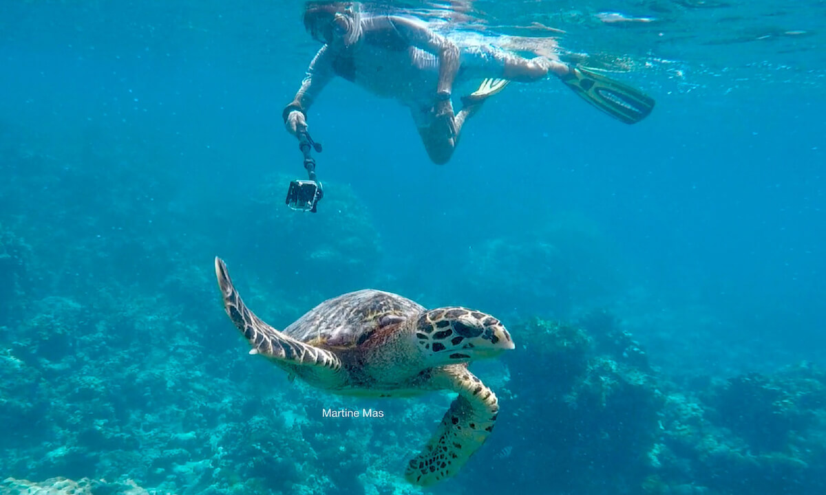 A snorkeler watching a sea turtle in Denis Island, Seychelles