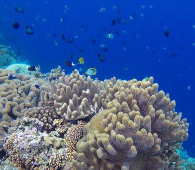 Hatta Island
