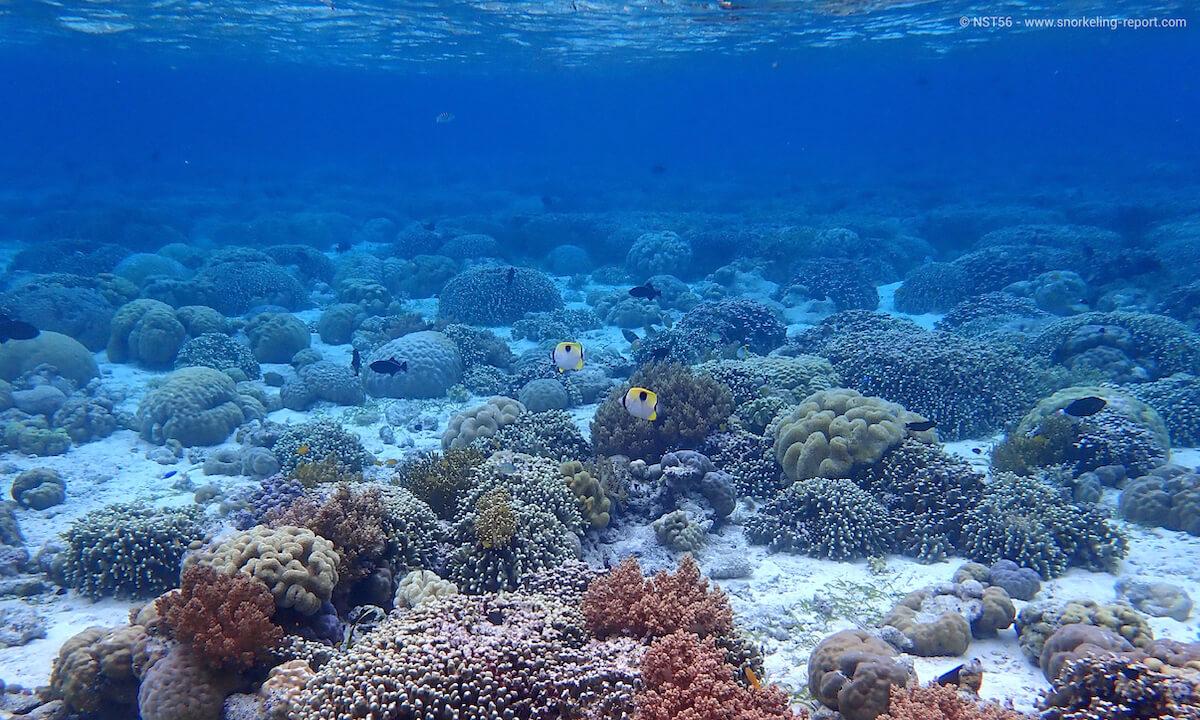 Coral reef at Wakatobi Dive Resort