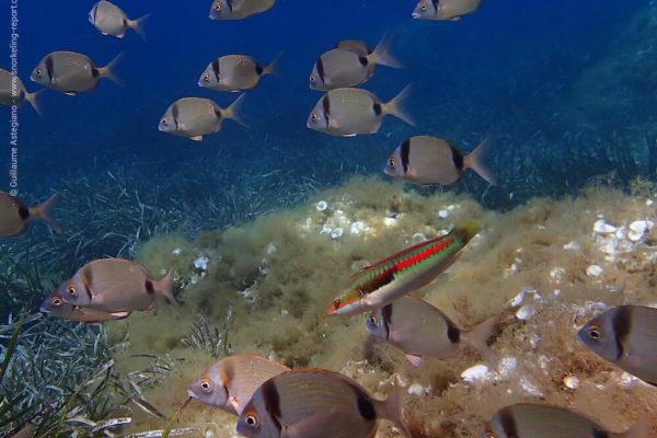 Best snorkeling spots in the Mediterranean