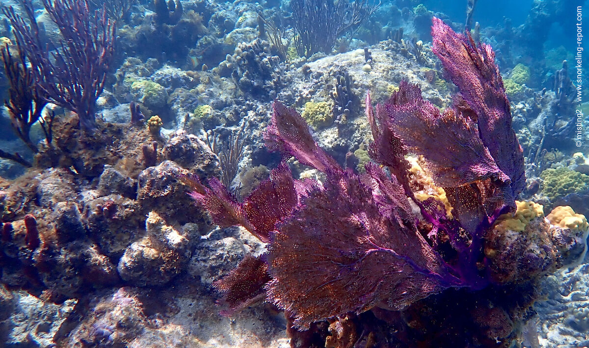 Coral and sea fans at Smith's Reef, Providenciales