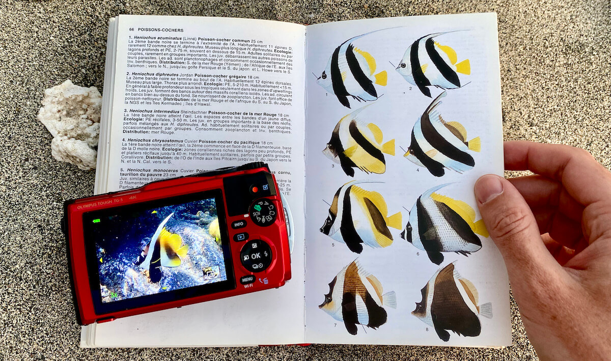 Snorkeler searching a fish in a book