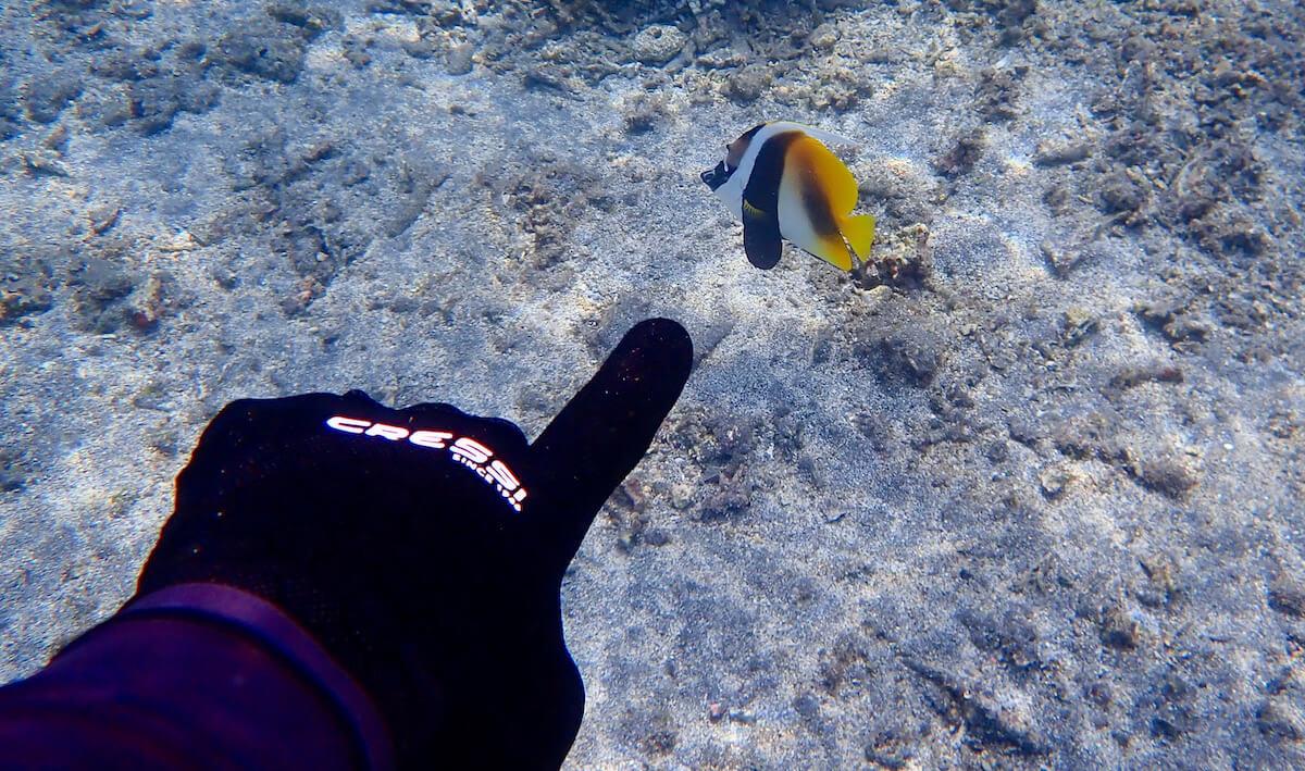Fish ID snorkeler showing fish