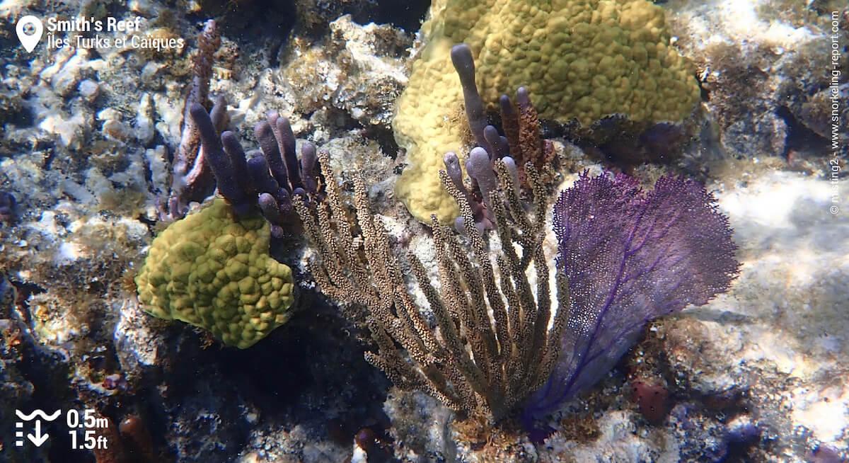 Coraux et gorgones à Smith's Reef