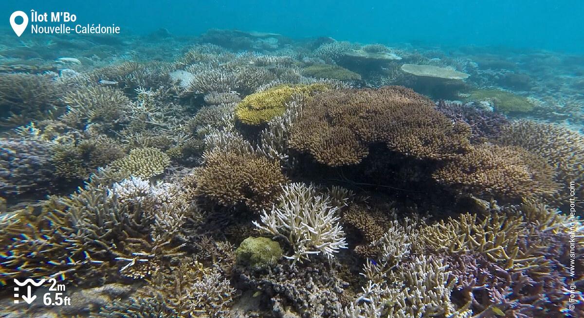 Récif corallien à l'Îlot M'Bo