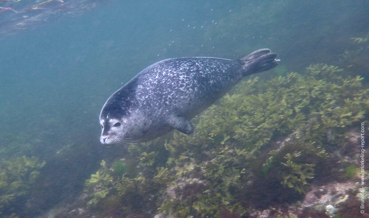 Seal in Forillon National Park