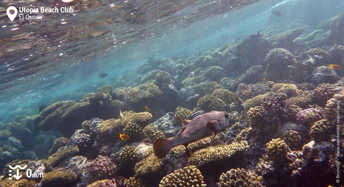 Utopia Beach Club reef flat