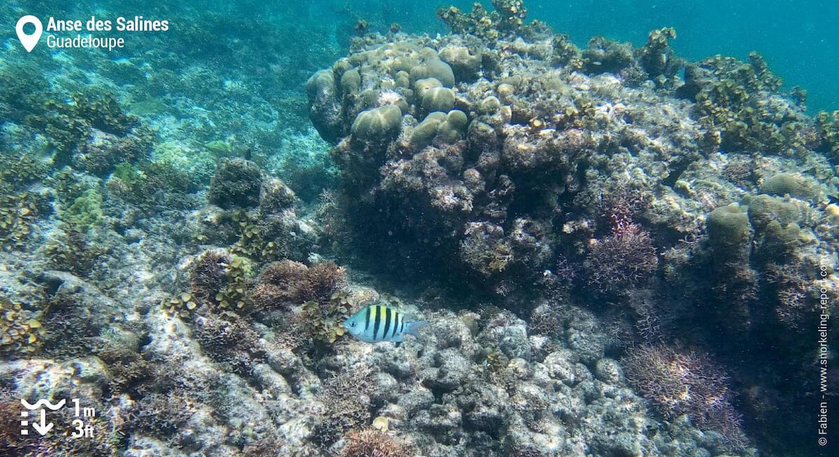 Récif corallien de la Pointe des Chateaux