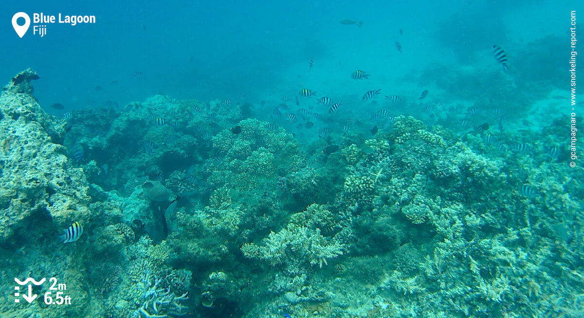 Coral reef at the Blue Lagoon