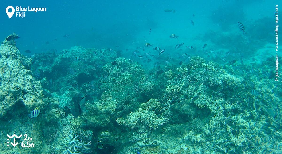 Récif corallien au Lagon Bleu