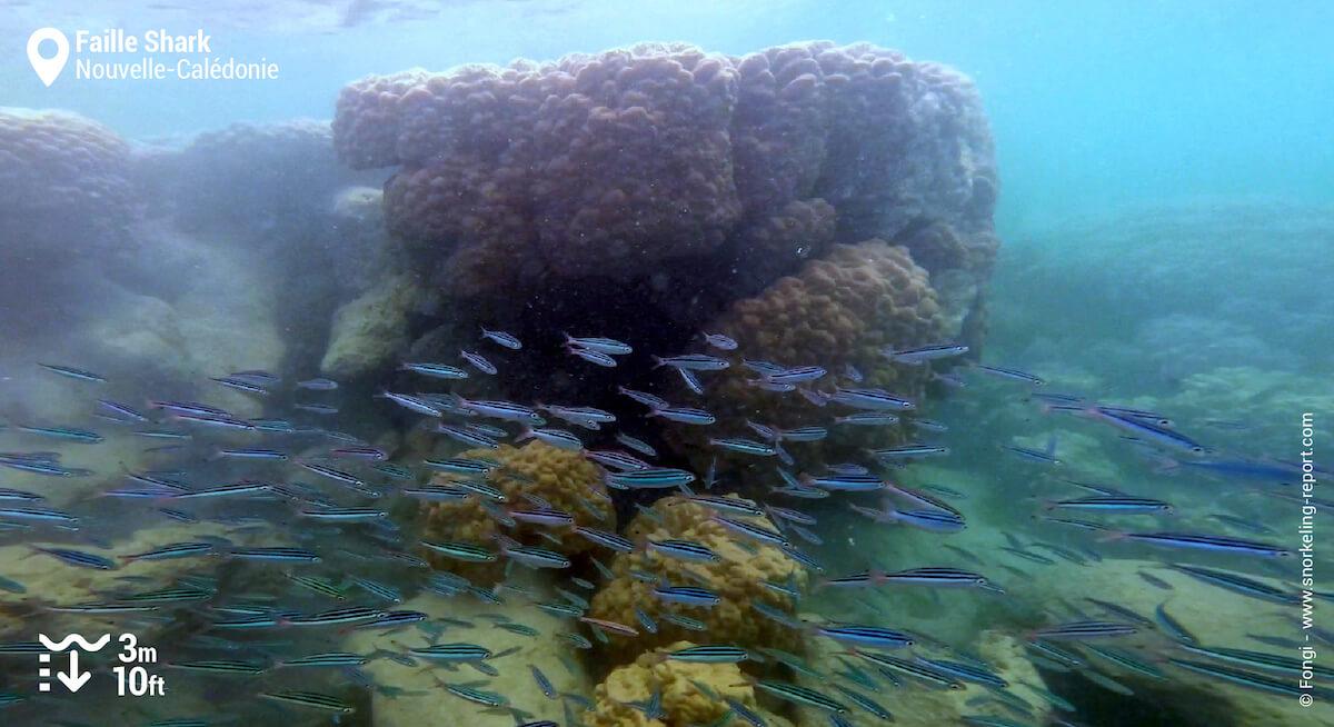 Récif corallien dans la faille de Poé